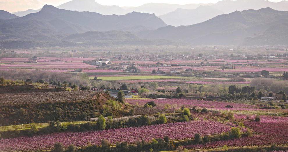 1 de Març. Pels Camps florits de la Ribera d'Ebre